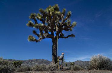 El oasis de U2 en el desierto de Sonora